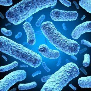 probiotico