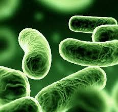 gut microbiota (3)