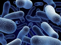 microbiota (3)