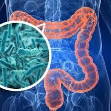 microbiota (4)